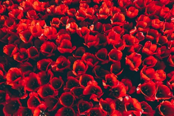 Màu sắc hoa tươi sự kiện trang trí lễ cưới để bạn tham khảo