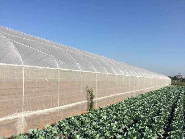 Nhà lưới nông nghiệp politiv israel, vật tư nhà lưới,mẫu nhà lưới đơn giản,tự làm nhà lưới