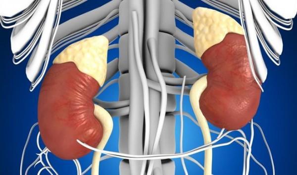 Một số bộ phận trong cơ thể có thể tái sinh