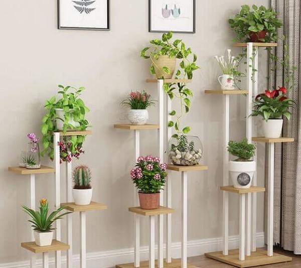 Một số loại cây phù hợp trồng trong nhà