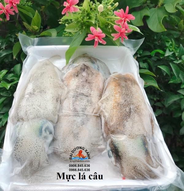 Mực lá câu Bình Thuận