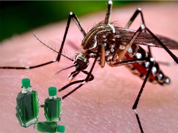 Muỗi có sợ mùi dầu gió không ? Cách đuổi muỗi bằng dầu gió và nước