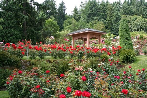 Nét thanh bình, thơ mộng của thành phố hoa hồng Portland