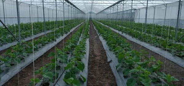 Nhà kính nông nghiệp politiv israel,công ty thi công nhà kính nhà màng, báo giá màng kính israel
