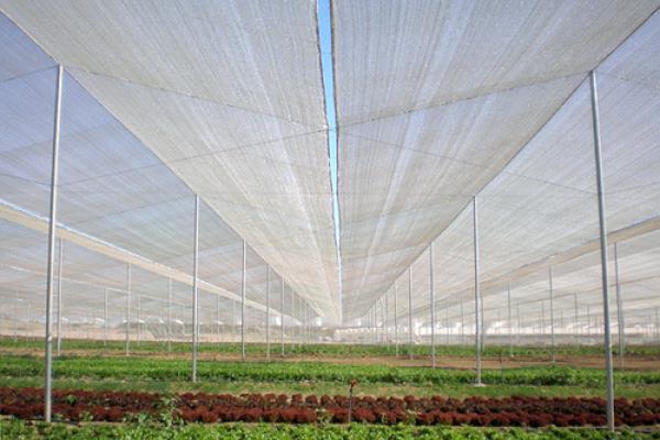 Nhà lưới israel trồng rau sạch, vật tư nhà lưới,mẫu nhà lưới đơn giản, nhà lưới trồng dưa