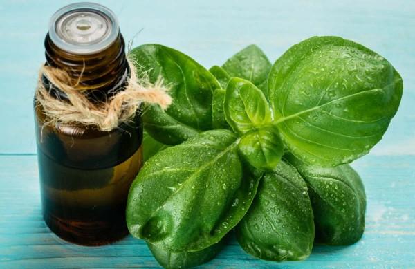 Những điều bạn cần biết trước khi sử dụng tinh dầu