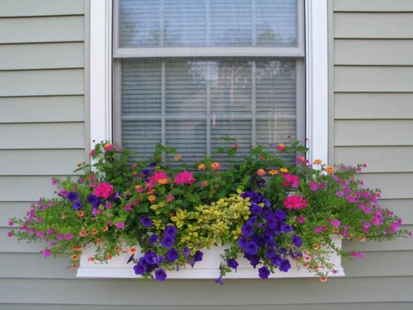 Những đóa hoa xinh mang lại sức sống cho mọi không gian