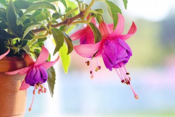 Những hình ảnh hoa đẹp rực rỡ và độc đáo nhất thế giới năm 2020