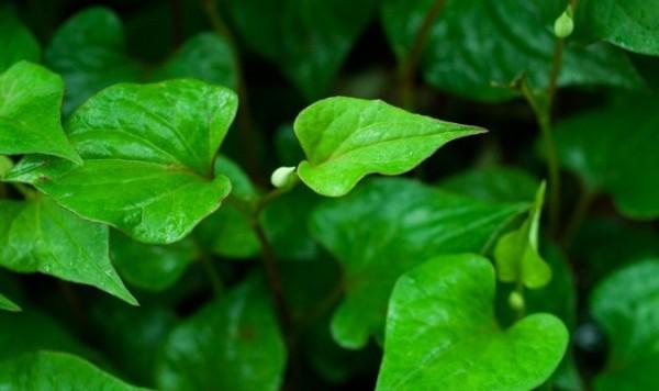Những loại rau củ dễ trồng nhất lại ít tốn công chăm sóc