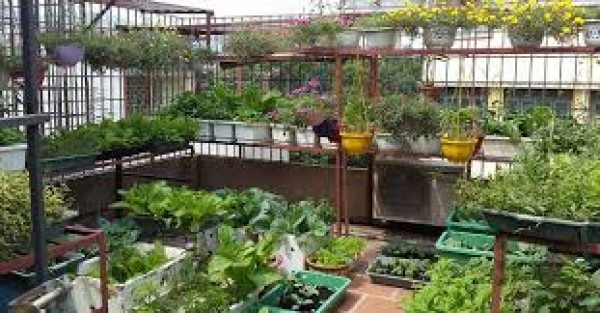 Những mẹo thú vị này để nâng cao kỹ năng làm vườn