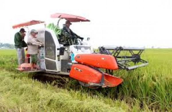 Phương pháp đột biến hô hấp giúp tạo giống lúa mới