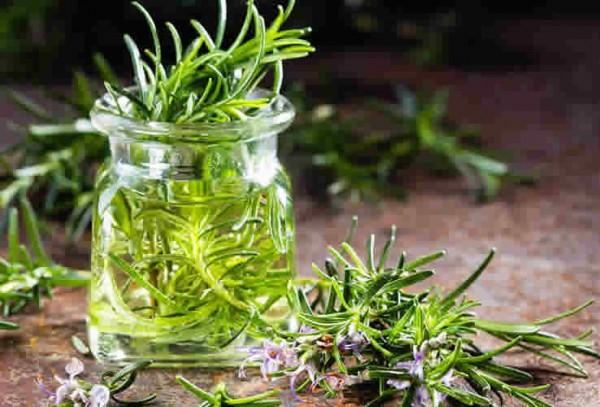 Phương pháp dưỡng da từ tinh dầu hương thảo