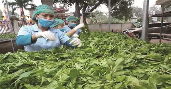 Quản lý dinh dưỡng chuyên vùng cho bắp ở Việt Nam