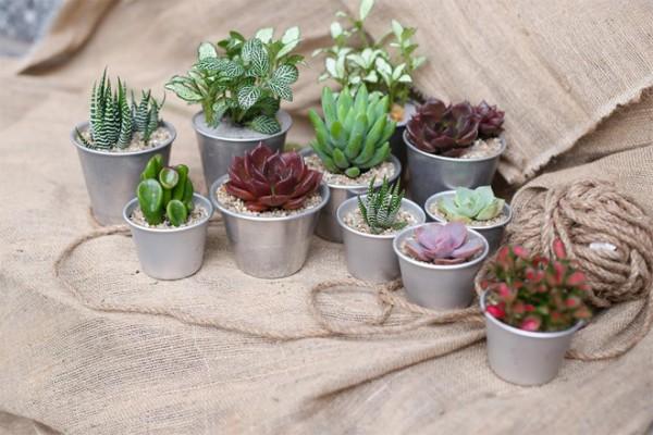 Sáng tạo những chậu cây mini trang trí nhà