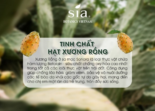 Sia Botanics – Top 10 mỹ phẩm hữu cơ được yêu thích nhất thế giới