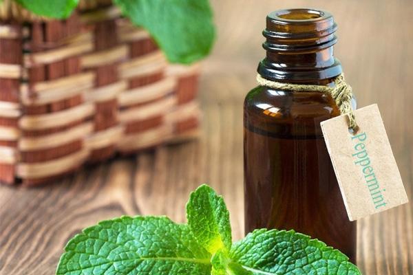 Tận dụng mọi lợi ích của tinh dầu bạc hà