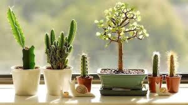 Tham khảo một số cách chăm sóc cây cảnh trong nhà