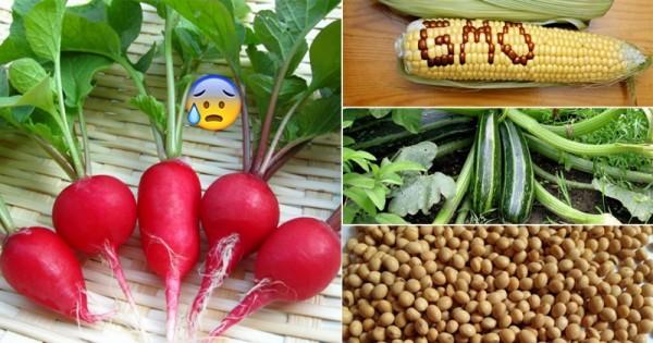 Thực phẩm biến đổi gen có thật tốt cho sức khỏe