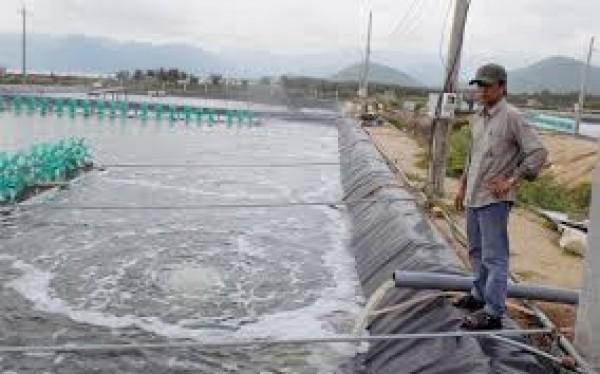 Tiết kiệm chi phí cho người nuôi trồng thủy sản