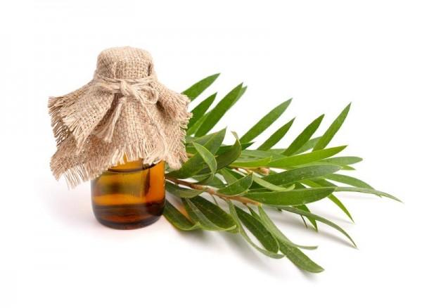 Tinh dầu tràm trà giúp điều trị các rối loạn về da