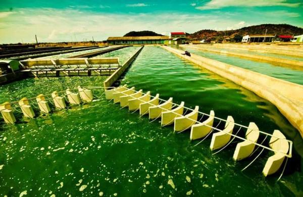 Tính khả thi của phương pháp sản xuất nhiên liệu sinh học từ tảo