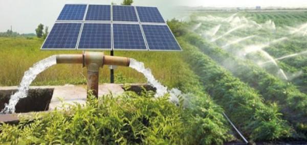 Tưới nước bằng năng lượng mặt trời nâng cao năng suất