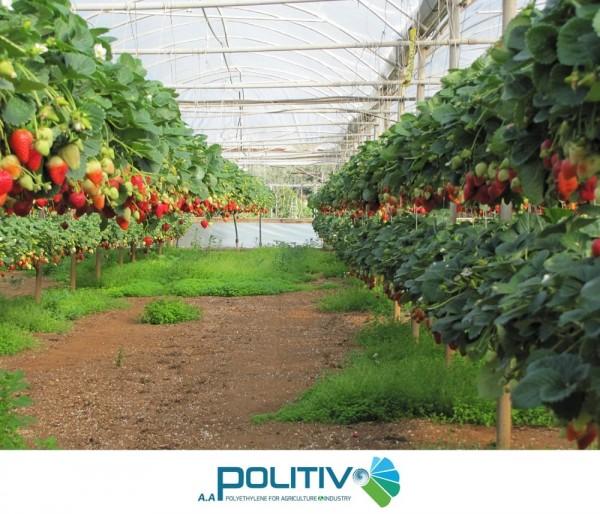 Vật liệu trọn gói nhà kính nông nghiệp, màng nhà kính chống tia UV, màng nhà kính 5 lớp Israel