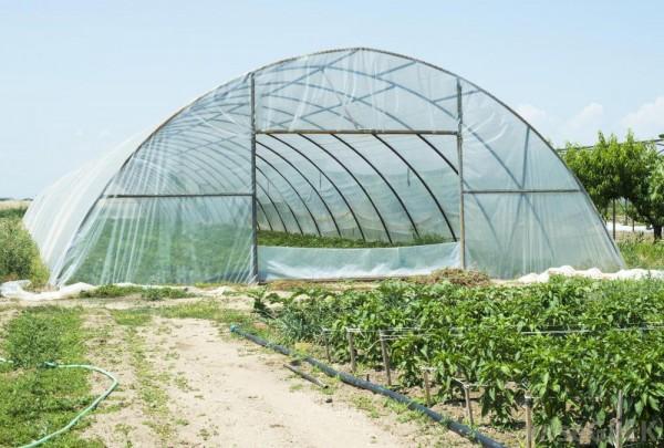 Vật tư nhà màng politiv Israel,băng keo dán màng, sợi se dưa lưới, túi PE trồng cây,