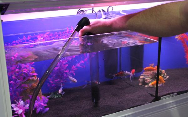 Việc làm sạch kính hồ cá có những cách rất đơn giản
