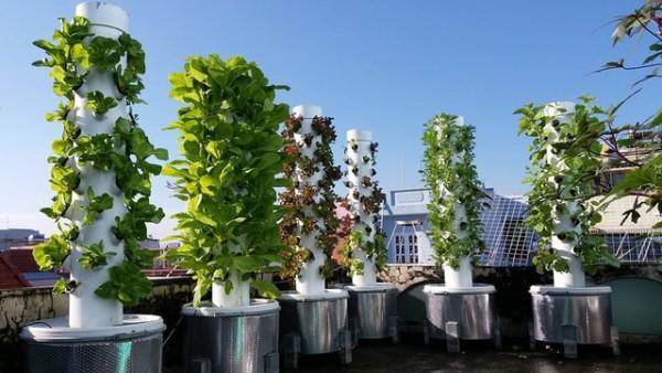 Xanh um nhờ rừng rau thẳng đứng trên sân thượng
